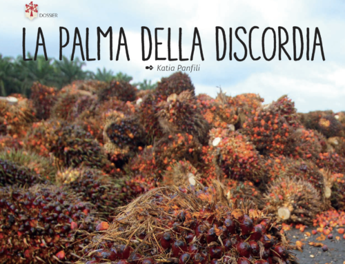 Olio di palma: la palma della discordia